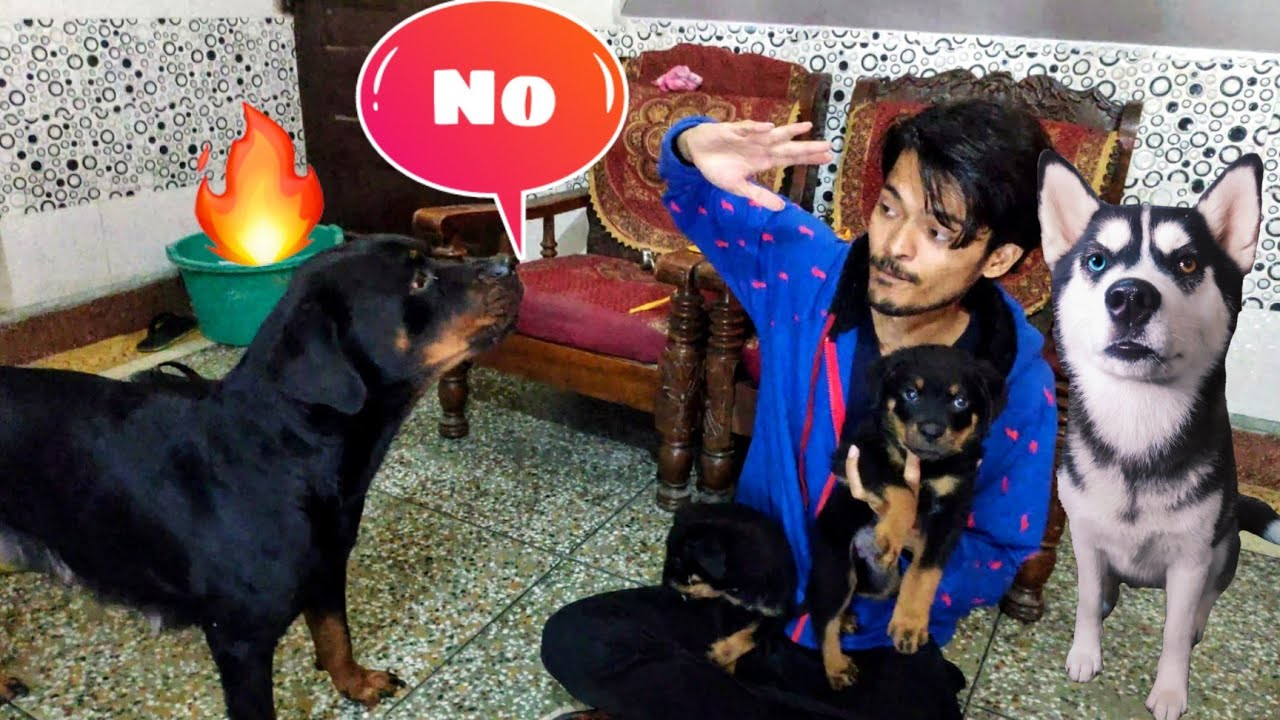 Roxy Protecting Sultan || Dog Can talk part 91 || Rottweiler protecting his puppy || Review Reloaded