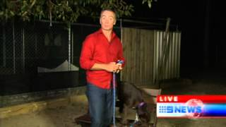 Nine News - Animal Welfare League Queensland