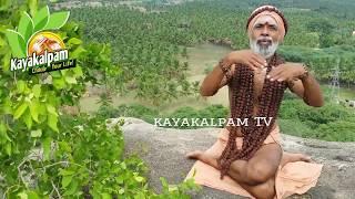 சளி தொல்லைக்கு ஒரே தீர்வு கருட சித்தர் | colds siddha medicine | garuda siddhar