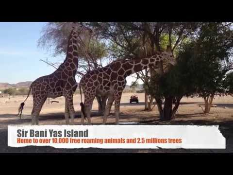 Out & About UAE: Sir Bani Yas Island