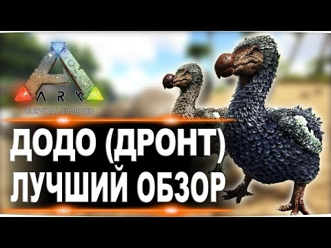 Додо (Dodo) в АРК. Лучший обзор: приручение и способности в Ark