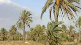 محمد الشارني / صالحي