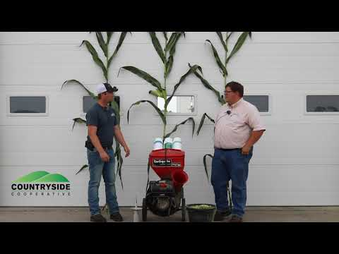 Corn Silage and Inoculants