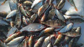 Первая весенняя рыбалка 2021 Погода сказка Жор окуня Ловля окуня и плотвы на мормышку