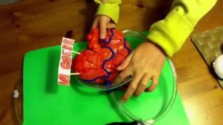 How to make a model heart that pumps