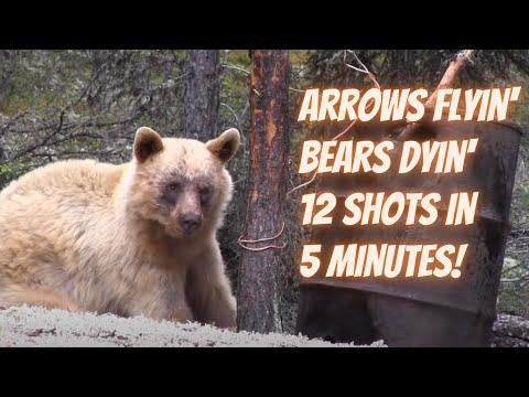 Arrows Flyin' Bears Dyin' 12 shots in 5 minutes