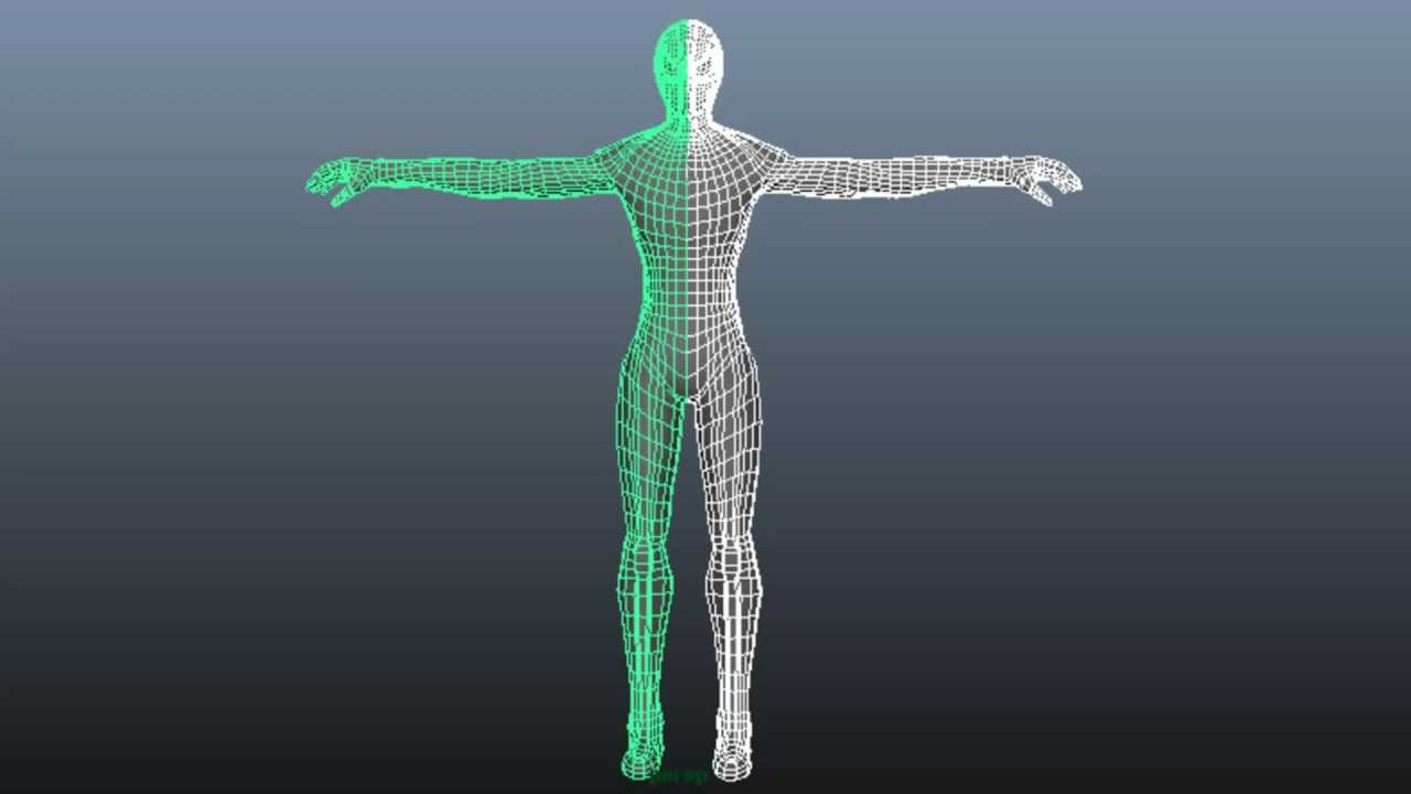 how to make a human body model 3d