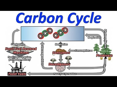 Carbon Cycle Song (Mr. W's Music Video)