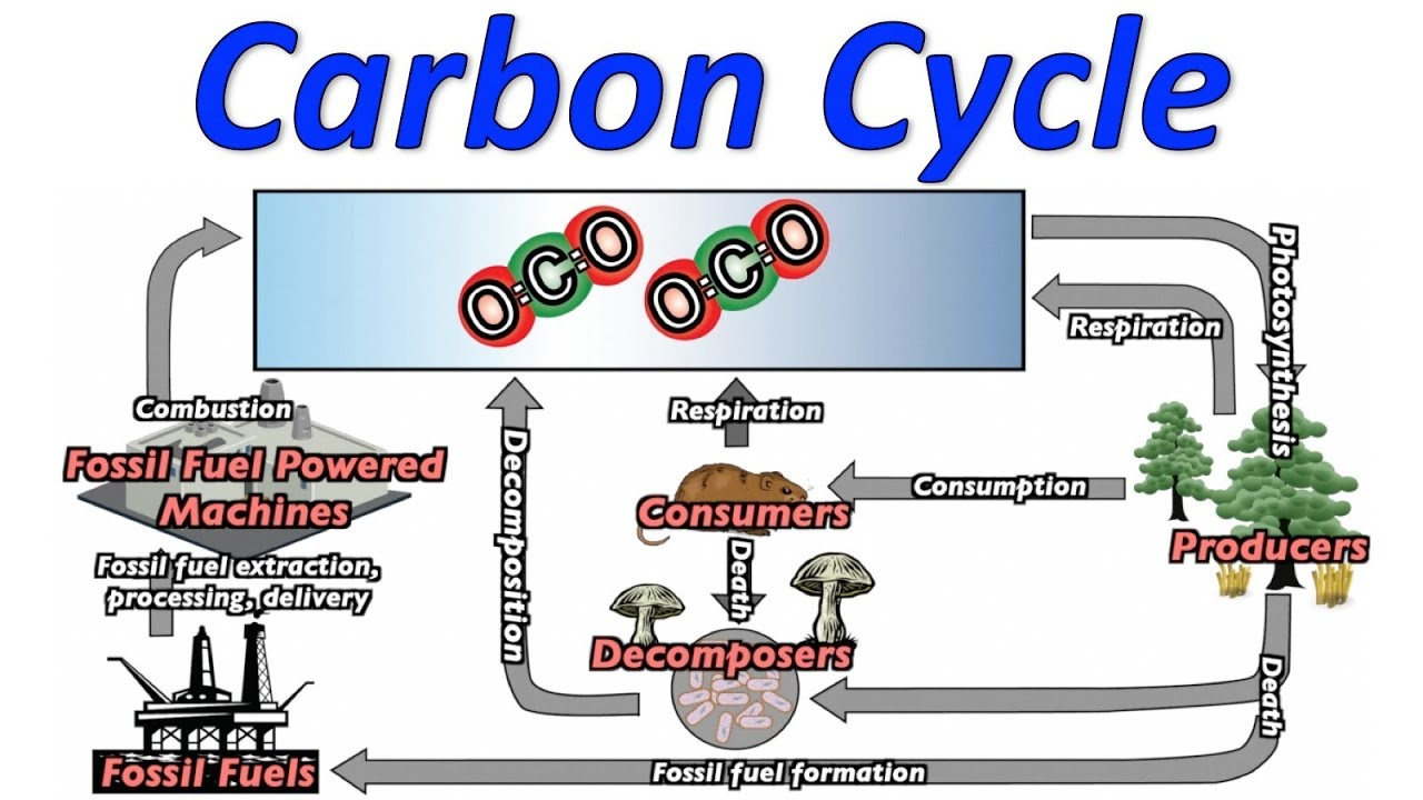 Carbon Cycle Fossil Fuels