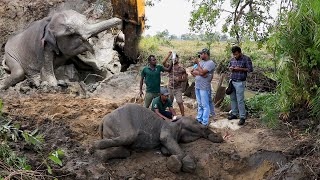 Giving life to a sick elephant who had no hopes of surviving- part 02