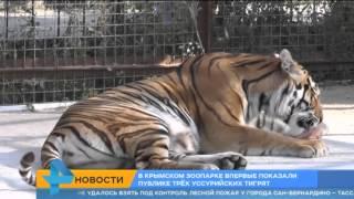 В Крымском зоопарке показали трех уссурийских тигрят(Официальный сайт: http://ren.tv/ Сообщество в VK: https://vk.com/rentvchannel Сообщество в Одноклассниках: http://ok.ru/rentv Сообщество..., 2015-07-18T08:44:24.000Z)