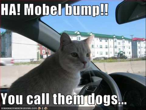 LOLCats in Little Duece Coupe Fast Cats Driving Crazy Music Video Funny Cats - YouTube