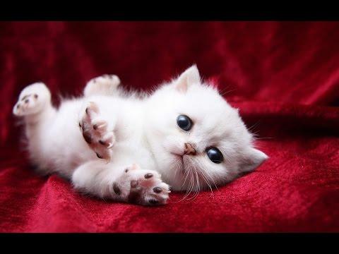 Смешные котята фото