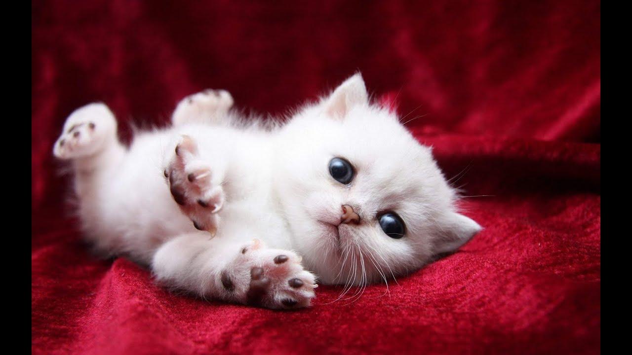 котята фото забавные