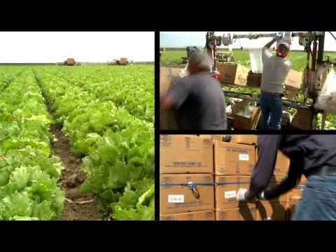Produce Traceability Solutions for Growers