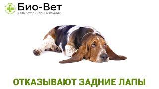 Отказывают задние лапы. Ветеринарная клиника Био-Вет.
