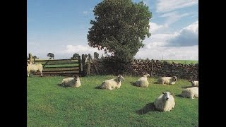 THE KLF  -  Chill Out  ( Full Album )