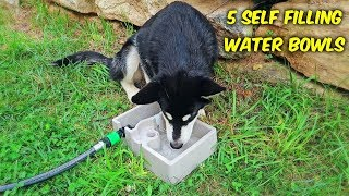 5 Self Refilling Water Bowl For Pets thumbnail