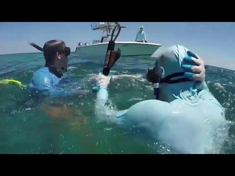 Franchy - Tiburon muerde pescador en la cabeza