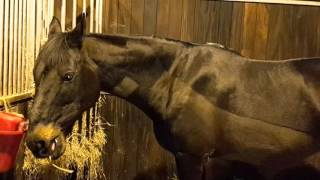 **update** rehab horse with air under skin - 14 days after surgery Video