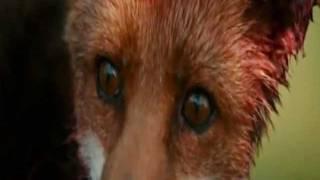 Deklica in lisica - Le Renard et L'Enfant.wmv