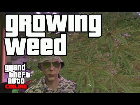 GTA Online - Growing Marijuana