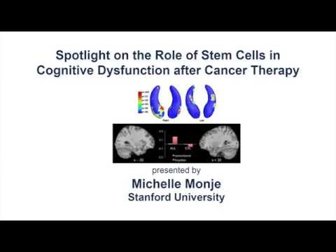 Role of Stem Cells on Cognitive Dysfunction after Cancer Therapy