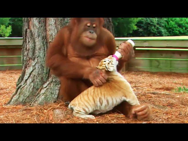 10 Животных, спасших друг друга