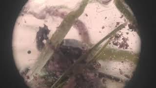 Чем питается Майский жук (бронзовка)