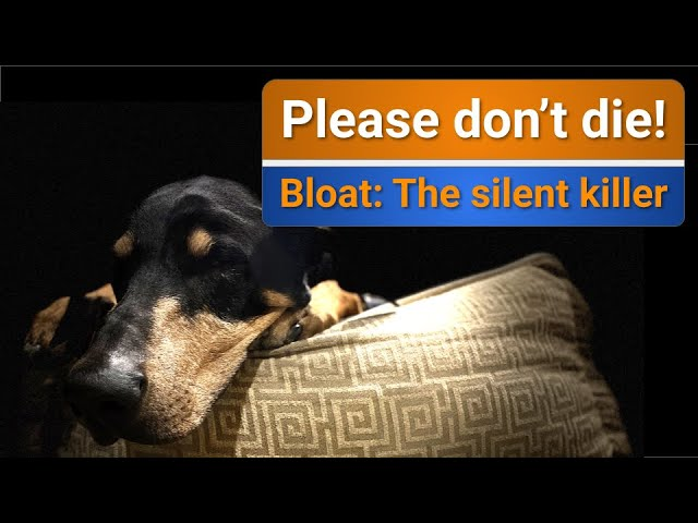 Bloat (GDV) in Dogs