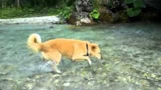 Unglaublich Süßer Hund Im Wasser (Österreich)