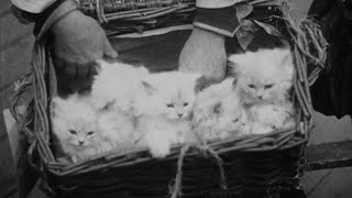 A Cat And Dog Life, Alexandra Palace and Crystal Palace (1928) | Britain on Film