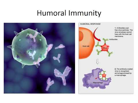 MBC Online Vet Tech Review 3.1 - Intro to Immunology