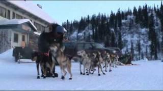 Gingin 200 /2010: Start Of Joseph Robertia's Dog Team