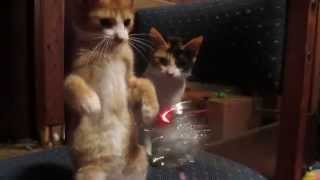 Adorable cat plays with jingle bells