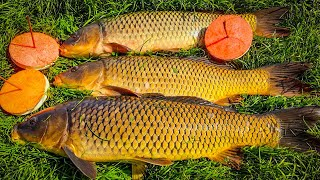 САЗАНЫ ТОРПЕДЫ ПРУТ КРУЖКИ ловля сазана на кружки рыбалка на дикого сазана карпа в кувшинках
