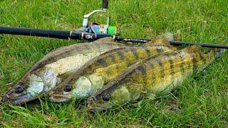 Ловля судака в затопленом коряжнике Эта приманка сделала рыбалку Рыбалка на судака