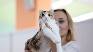Лучшие породистые коты и кошки России. Выставка кошек #8: Финал
