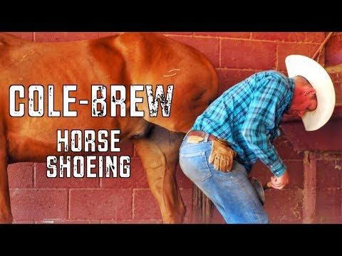 Shoeing Bandito - Rodeo Time 101