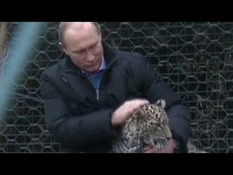 Putin cozies up with snow leopards in Sochi