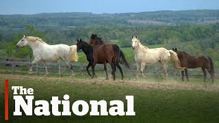 Youthdale Riding Program as Featured on CBC The National