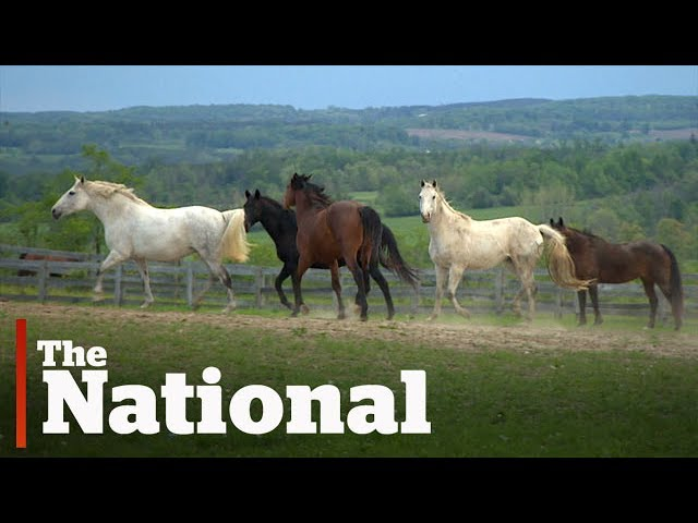 RCMP horses help at-risk youth build confidence