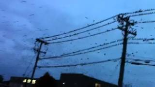 Birds Flying Away From Hurricane Sandy