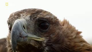 National Geographic: Планета птиц / Planet of the Birds [2018, Документальный]