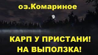 Русская рыбалка 4 - озеро Медвежье - Карп и амур у края карты