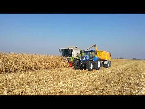 Kukurydza na ziarno 2017 w GR Radłów ! /Claas Tucano 440 & NH T7.260