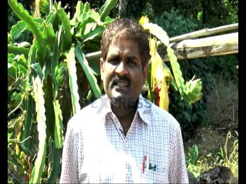 Success story on Dragon Fruit farming in Visakha Agency - Express Tv