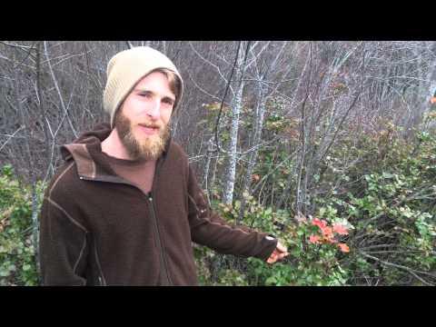 Understanding herbs through Evolutionary Herbalism: Oregon Grape