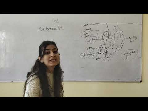 Male Reproductive System part-1