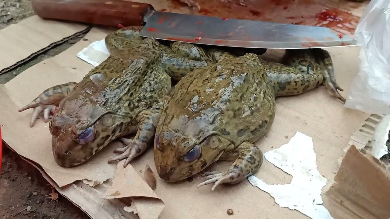 ស្រុកស្រែមានតែប៉ុណ្ណឹង បងប្អូនអើយ Skinning Frog in The Countryside